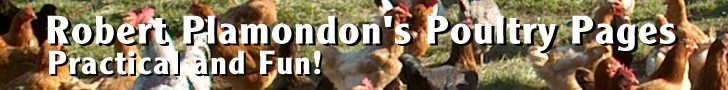 Norton Creek Poultry and Chicken Lore