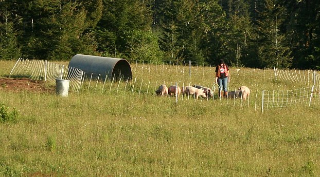 Grass-Fed Pastured Pigs at Norton Creek Farm