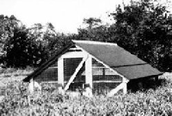 Chicken coop: summer shelter